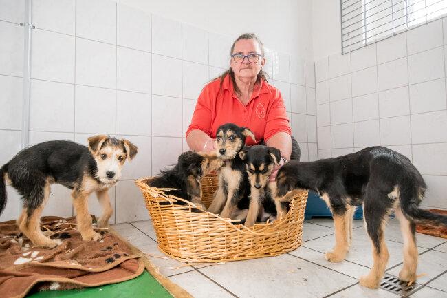 Tierschutzvereins-Leiterin Ulrike Kreher mit einem Teil der Hunde.