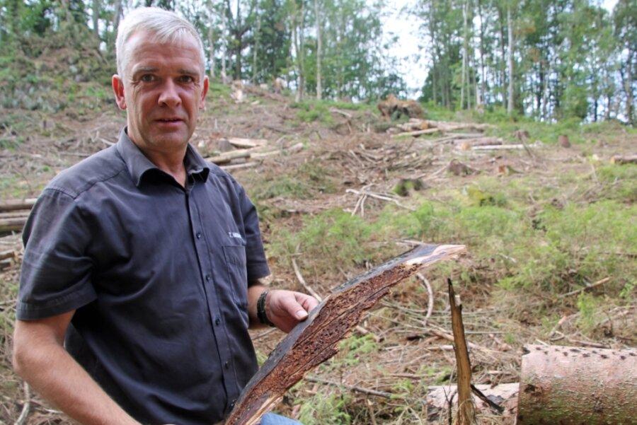 Unter der Rinde eines gefällten Baumes räkeln sich Unmengen an weißen Borkenkäferlarven. Thomas Müller will der Zerstörung des heimischen Waldes nicht länger tatenlos zusehen.