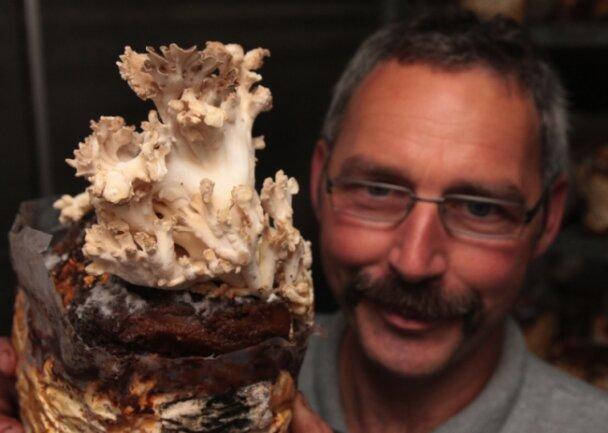 """<p class=""""artikelinhalt"""">Nein, das ist keine Koralle aus dem Südsee-Aquarium, sondern ein Pilz: Züchter Andreas Diedrich mit einem Exemplar des Maitake-Pilzes, der seit diesem Jahr in der Reitzenhainer Champignonzucht Münzner wächst. Der auch Laubporling genannte Pilz bevorzugt eine Temperatur von 16 Grad Celsius sowie eine Luftfeuchtigkeit von 95 Prozent. Zugluft hingegen mag er ganz und gar nicht. </p>"""
