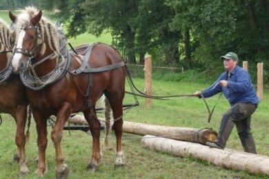 Schon beim Flechten der Zöpfe ihrer Pferde bewies Ines Bruchhold ein geschicktes Händchen - ebenso wie dann beim Holzrücken.