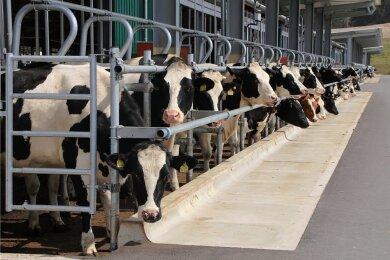 Dieser Stall der Agrargenossenschaft Reichenbach in Rotschau entspricht der Zertifizierung für eine Außenklima-Haltung. Je nach Tier-Haltungsform ist bei der Vogtlandmilch eine eigene Abfüllstrecke geplant.