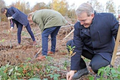 Während Sparkassenvorstand Dirk Helbig (links) und Baubürgermeister Holger Reuter noch schippen, pflanzt Oberbürgermeister Sven Krüger bereits die erste Stieleiche im Freiberger Stadtwald.