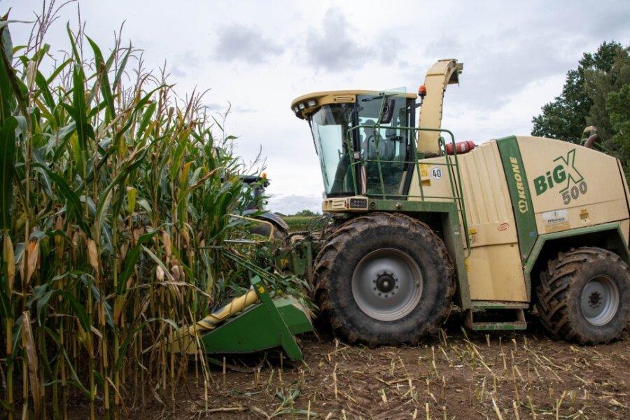 Der Landwirtschaftsbetrieb von Ralf Kühn in Topfseifersdorf wird zurzeit mit einem Feldhäcksler der Firma Land- und Gartentechnik Friedrich aus Bad Lausick bei der Maisernte unterstützt.