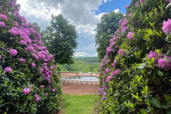 Schlosspark Lichtenwalde wird zum Blütenmeer