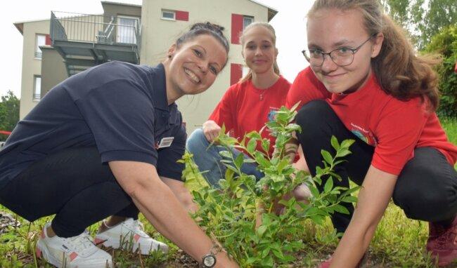 Wendy Nestler (l.), Ausbilderin der Thumer Jugendrotkreuz-Gruppe und zugleich Sozialbetreuerin im Seniorenzentrum, pflanzt mit Linda Voigt (r.) und Sophia Bleyl Johannisbeersträucher.