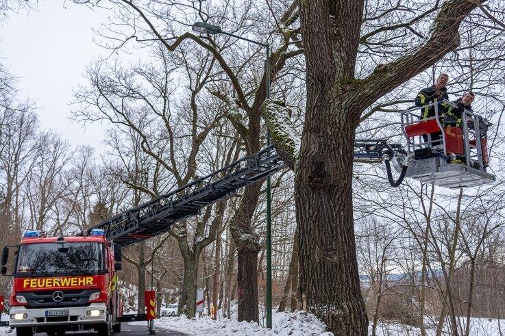 Das war auch für die Auerbacher Feuerwehr ein Novum: Von der Drehleiter aus nahmen Gemeindewehrleiter Nico Voigtländer und Uwe Müller die Baumkronen an der Falkensteiner Straße in Auerbach unter die Lupe. Hintergrund ist eine bevorstehende Fällaktion.