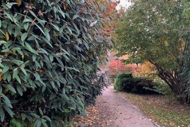Regelrecht zugewachsen sind die Wege im Park des Friedens. Die Stadt plant daher einen großflächigen Rückschnitt.