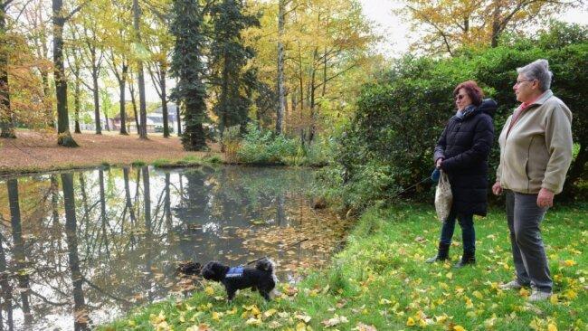 Im Stadtpark von Limbach-Oberfrohna gibt es einen kleinen Teich, der auch als Seerosenteich bezeichnet wird. Das Gewässer soll durch verschiedene Umgestaltungen wieder einladender für Spaziergänger und Touristen werden.