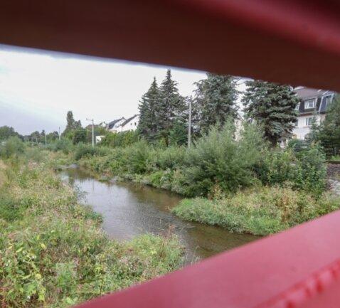 Die Würschnitz unweit der Annaberger Straße in Chemnitz. Das Flussbett wächst mehr und mehr zu. Foto: Toni Söll