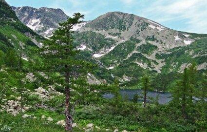 Viel Platz zum Wachsen: Lärchen in der sibirischen Waldtundra.