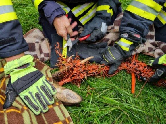 Um den Rehbock aus seiner misslichen Lage zu befreien, hielten ihn die Feuerwehrleute unter Anleitung eines Jägers mit einer Decke am Boden fest und schnitten das Zaunsgeflecht vom Geweih ab.