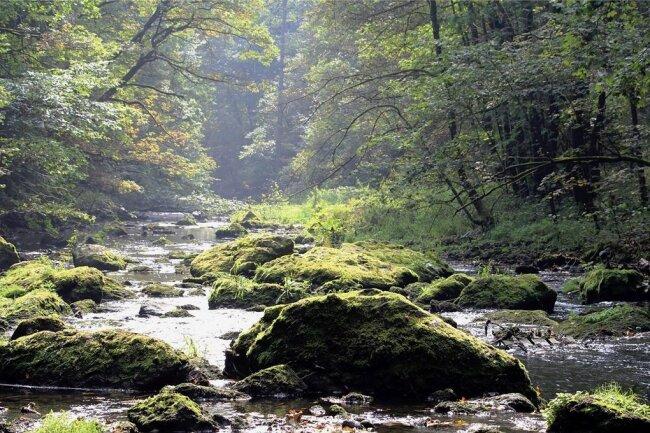 """Das romantische, bei Wanderern beliebte Triebtal zwischen der Talsperre Pöhl und der Trieb-Mündung in die Weiße Elster nahe der Elstertalbrücke wird Bestandteil des Naturschutzgebietes """"Elstersteilhänge""""."""