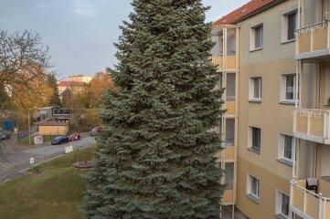 Bis gestern noch stand die 52 Jahre alte Tanne im Münzbachtal vor dem Haus 8a-8c.