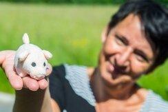 VORSICHT SATIRE: RÜCKBLICK AUF DIE WOCHE: Schwein gehabt!