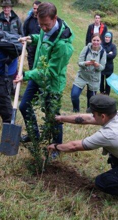 Sachsens Ministerpräsident Michael Kretschmer pflanzte im Arboretum eine Stechpalme.