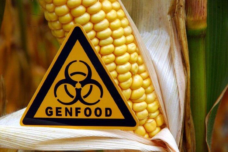 Anbau gentechnisch veränderter Pflanzen nimmt weltweit zu