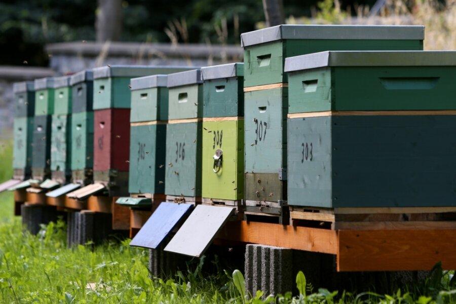 Bienenstöcke sorgen für Musik im Park