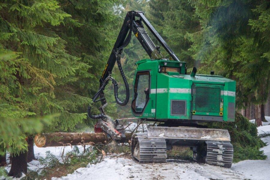 Mit extra breiten Ketten und deutlich weniger Gewicht sind die Holzerntemaschinen im Revier Antonsthal unterwegs. Die beauftragte Firma hat sich auf Nassstandorte spezialisiert.