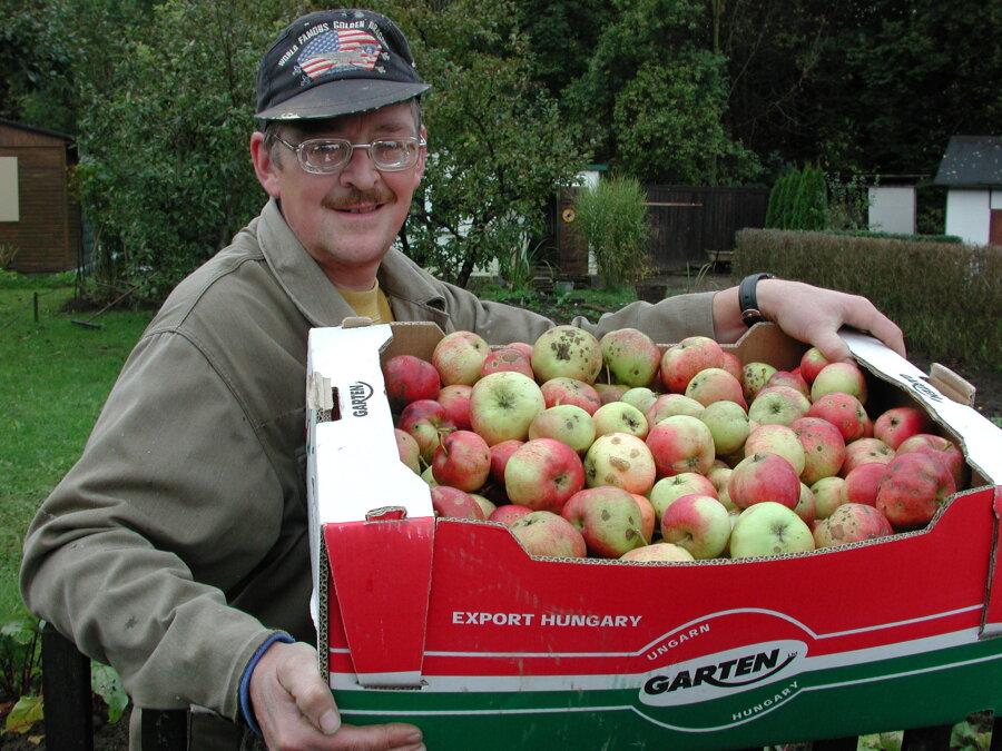 Steffen Dietel ist in der Lichtenberger Anlage Gimmlitztal ein fleißiger Tafelgärtner. Neben verschiedenem Gemüse hat er jetzt Äpfel für die Freiberger Tafel geerntet.
