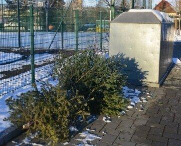 Weihnachtsbäume an der Turnerstraße in Hainichen.