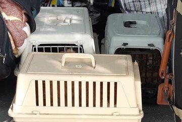 Im Kofferraum fanden die Beamten fünf Welpen in drei Transportboxen.