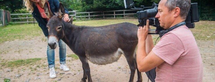 Die Mini-Eselstute Amy gehörte zu den tierischen Stars, die Zoochefin Bärbel Schroller vor die Kamera von Gerald Gerber brachte.