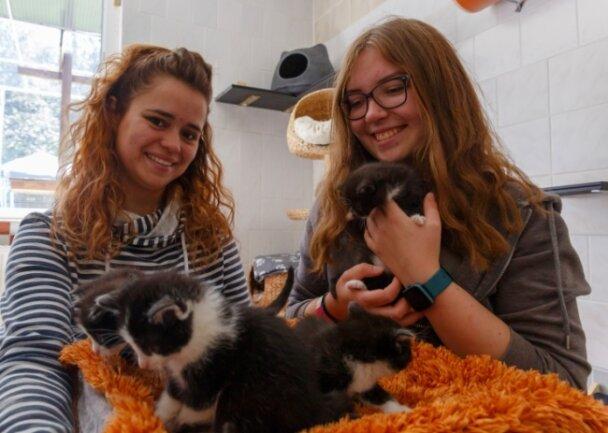 """Lissi Burkhardt (l.) und Nathalie Wagner zeigen einige der Katzenkinder, die derzeit im Tierheim """"Neu-Amerika"""" betreut werden. Am Samstag lädt die Einrichtung zum Tierheimfest ein."""