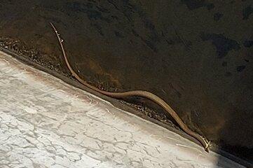 Spaziergänger hielten die Schlange an der Talsperre im Bild fest. Der Ausschnitt ist gezoomt.