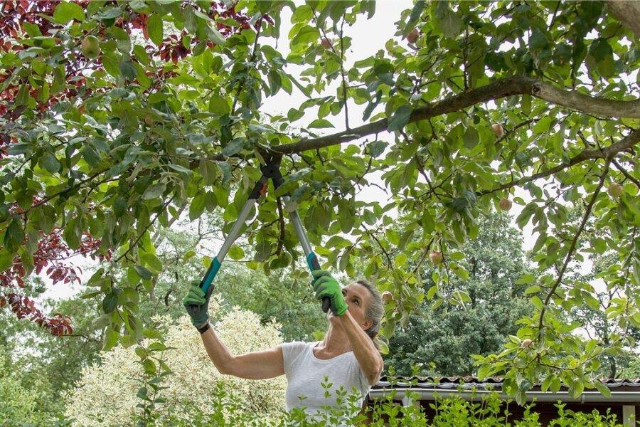 Äste von Nachbars Baum, die in den eigenen Garten ragen, darf man abschneiden.