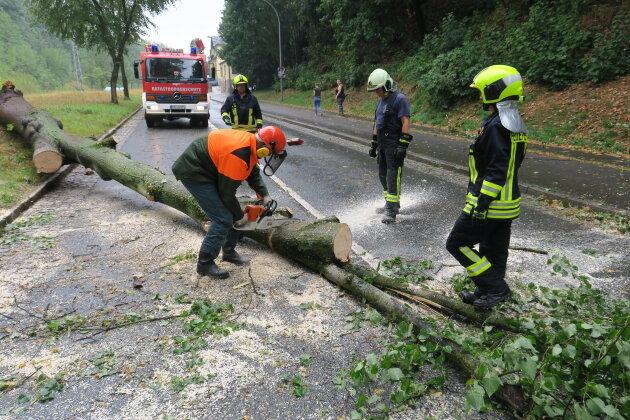 Die B 169 in Schneeberg musste für kurze Zeit gesperrt werden, nachdem ein Baum auf die Straße stürzte.