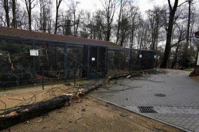 Der Sturm hat nun auch seine Spuren im Tierpark Hirschfeld hinterlassen.