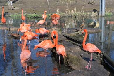Flamingos im Limbacher Tierpark