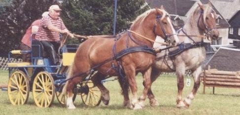 Beim Holzrücken zieht ein Pferd einen zwölf Meter langen Stamm. Doch auch Hindernisfahrten mit Kutschen sind Teil vieler Wettkämpfe. Das Bild zeigt den Erzgebirger mit seinen Tieren bei einer Schauvorführung in Gelenau. Privat