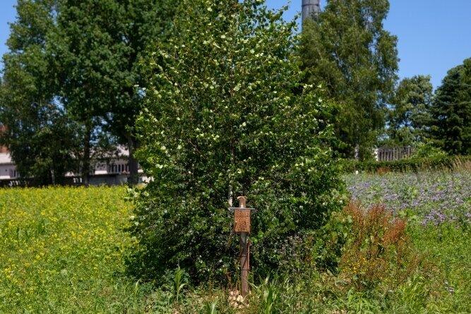 Links im Bild die mehrjährige, rechts die einjährige Blühfläche und in der Mitte eine Nisthilfe für Wildbienen.