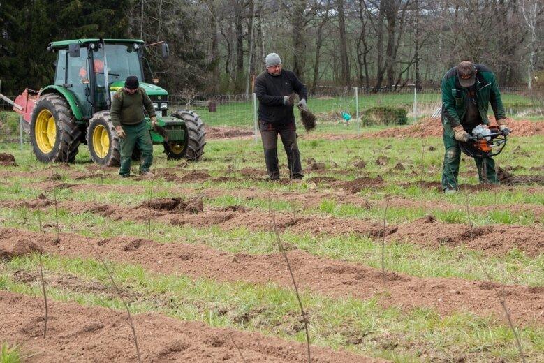 Beim Pflanzen der jungen Bäume kommt nicht mehr der Spaten zum Einsatz. Für die Pflanzlöcher greifen die Arbeiter zu moderner Technik.