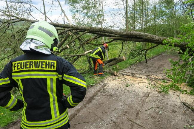 Neben dem Sportplatz waren vier Bäume umgestürzt.