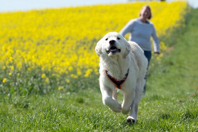 Tierärzte und Politiker fordern Halterprüfung für Hundebesitzer