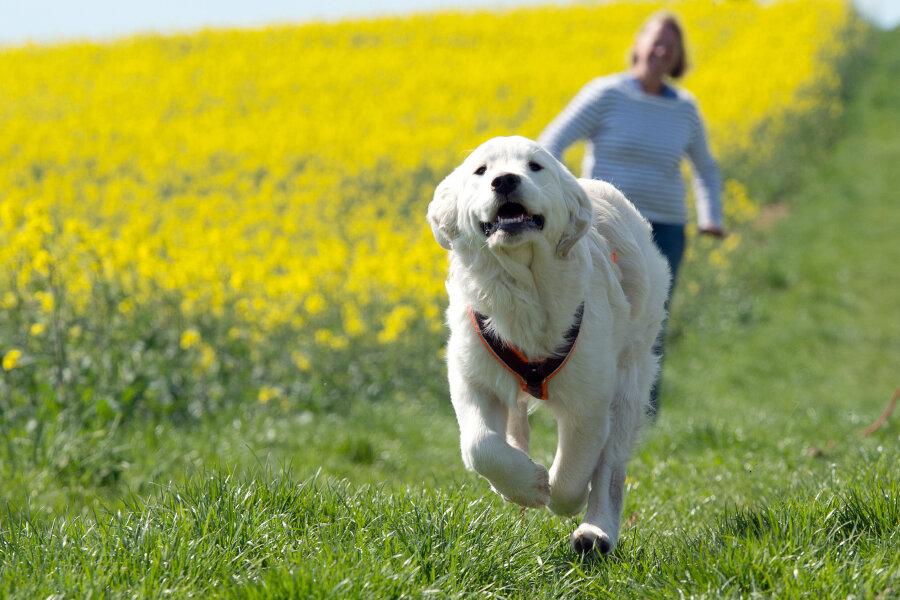 Bundesregierung will Hunden per Verordnung ausreichend Auslauf garantieren