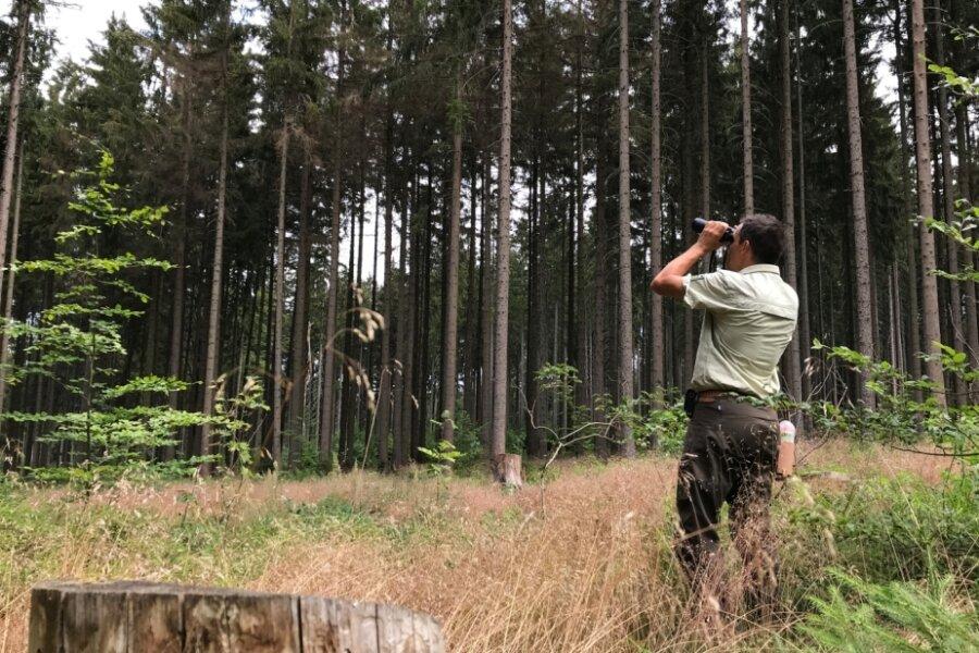Mischa Schubert sucht auf Fichtenborke nach typischen Anzeichen, die auf Käferbefall hinweisen.
