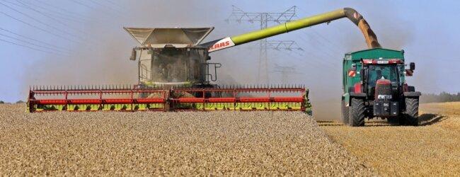 Während des Ernteprozesses kann der Claas Lexion 8900 seinen Korntank leeren. Der fasst 13 Tonnen Getreide. Das Schneidwerk des Riesen nimmt Getreide auf einer Breite von 12,50 Meter auf. Dabei werden alle Parameter vollautomatisch über Computer angepasst.