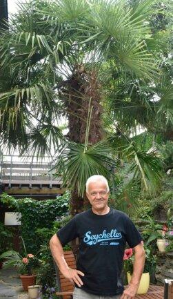Kaum zu glauben, aber im Garten von Frieder Höfer in Unterhermsgrün wachsen zwei meterhohe Fächerpalmen, die vor 25 Jahren noch kleine Setzlinge waren.