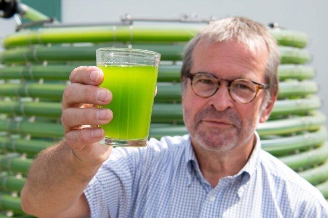 Dr. Martin Ecke, Fachbereichsleiter Biosolar bei Gicon, zeigt eine Probe aus dem neuen Mikroalgen-Photobioreaktor auf dem Gelände von Agraset Naundorf. Die Algen werden dem Tierfutter beigemischt.