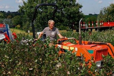 Daniel Pistorius fährt mit Traktor und Erntemaschine durch die Plantage in Langenchursdorf.