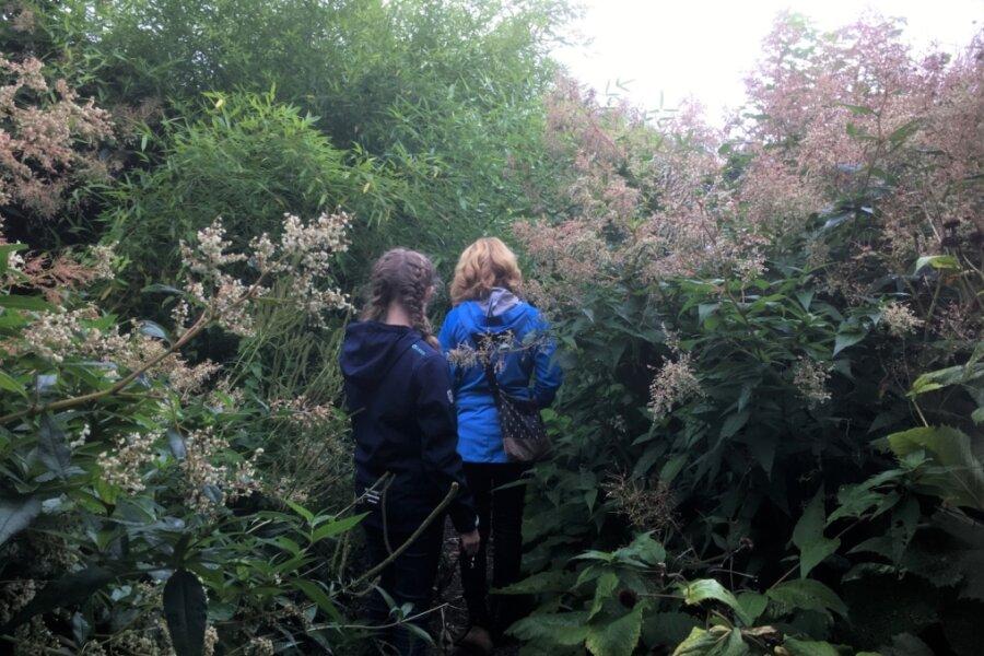 Der Dschungel in Reichenbach