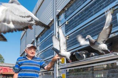 Roland John züchtet seit 60 Jahren Brieftauben. Er freut sich über das neue Fahrzeug, in dem die Tiere zu den Aussetzorten befördert werden.