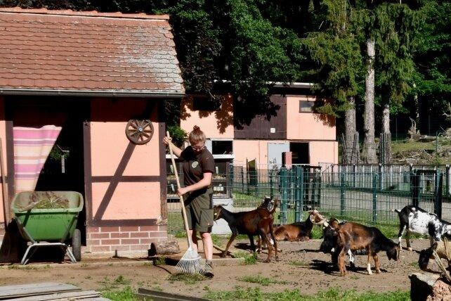 Die Freiwilligendienstleistende Carla Tennler reinigt die Anlage für dieZiegen. Dieser Bereich soll einer des neuen Inkalandes im Amerika-Tierpark von Limbach-Oberfrohna werden.