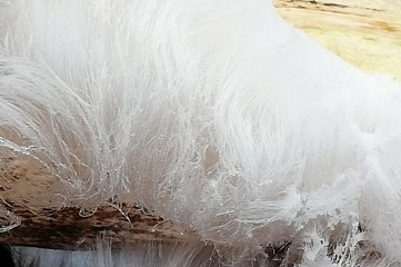 Angela Burkhardt hat seltenes Haareis entdeckt - ein Naturphänomen, das im Zusammenhang mit einem Pilz entsteht.