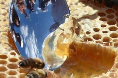 Etwa ein Kilo Honig verzehrt jeder Deutsche im Schnitt pro Jahr.