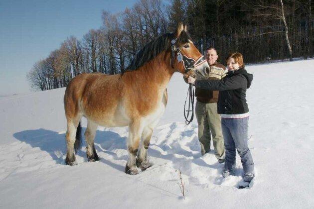 Die Stute Sambrina ist der Stolz von Züchter Wolfgang Degel aus Marbach. Enkeltochter Claudia wird das Pferd vor der Bewertungskommission präsentieren.