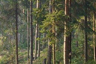Hartmannsdorfer Forst wieder freigegeben